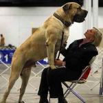 Разновидности отпугивателей собак
