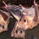 Отпугиватели летучих мышей