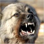 Отпугиваем собак