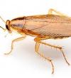 Насколько эффективны электронные отпугиватели тараканов?