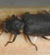Борьба с жуками-точильщиками.